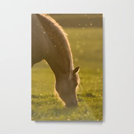 Golden light in horse's mane Metal Print