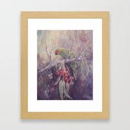 Musk Lorikeet Framed Art Print