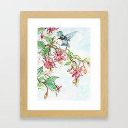 Honeysuckle Hummingbird Framed Art Print