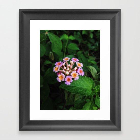 Lantana Camara Framed Art Print