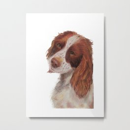 Gemma Springer Spaniels Without Background Metal Print