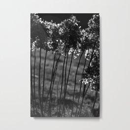 Lichtblick Metal Print