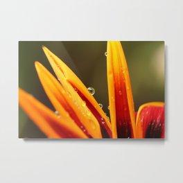 orange petals Metal Print
