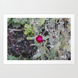 Burgundy Flower Art Print