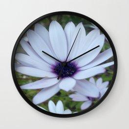 White Osteospermum Flower Daisy With Purple Hue Wall Clock