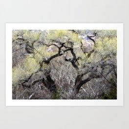 Cottonwood in Spring Art Print