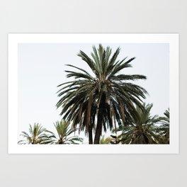 Palm Trees in Sicily Art Print