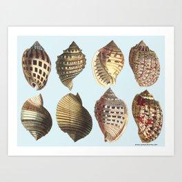 shell sea Art Print