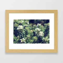 South Head Flowers Framed Art Print