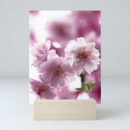 Double weeping cherry blossoms Mini Art Print