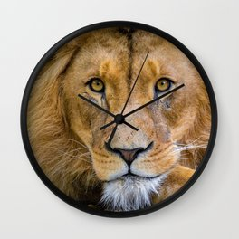 Eyes of the King of the Jungle color photograph / photography Wall Clock