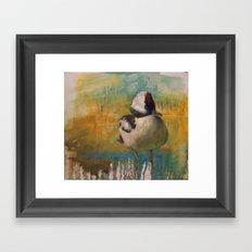 Ruddy Duck (Oxyura jamaicensis) Framed Art Print
