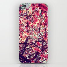 Blossom tree iPhone & iPod Skin