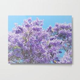 Jacaranda in bloom Metal Print