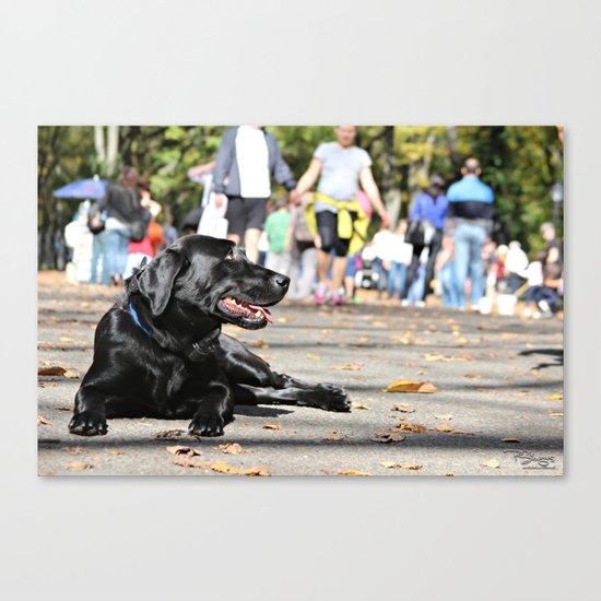 Dogs world Canvas Print