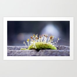 Maco photography Moss Water Drop Rain drops dew Green nature photography Art Print