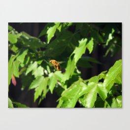 Buzzy Boy Canvas Print