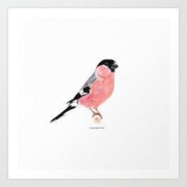 Siberian Bullfinch (white palette) Art Print