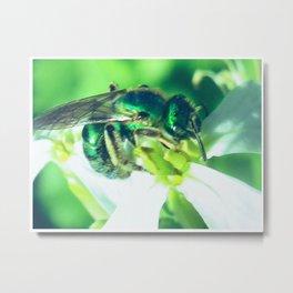 green bee Metal Print