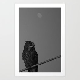 Owl B&W Art Print