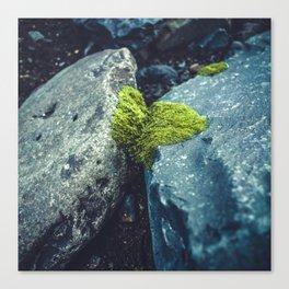 Nature Conquers Canvas Print