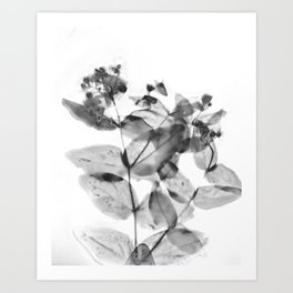 Ghostly Blooms Art Print