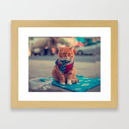 Tie Beige Cat Sitting Begging Framed Art Print