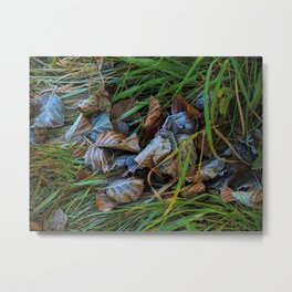 first frost in sweden Metal Print