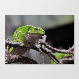 Monkey Frog Canvas Print