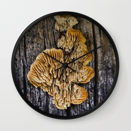 Spores on Wood #1 Wall Clock