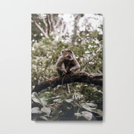 monkey forest / indonesia Metal Print