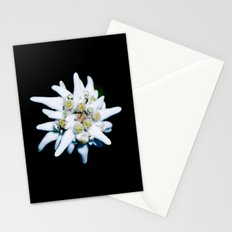 Single isolated Edelweiss flower bloom Stationery Cards