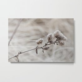 Early frost winter still life Metal Print