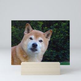 Cute Shiba Dog Mini Art Print