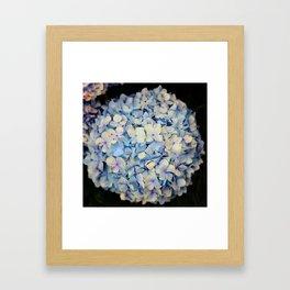 Hydrangia Vintage Framed Art Print
