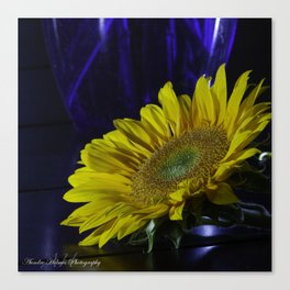 Sunflower and blue Canvas Print