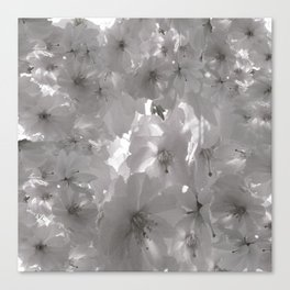 CHERRY BLOSSOMS IN BLACK AND WHITE Canvas Print