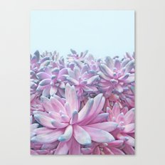 Sweet Succulents Canvas Print