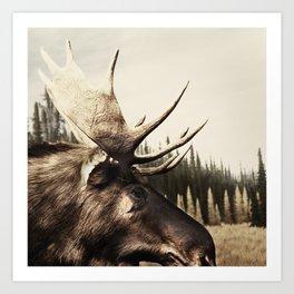 Tom Feiler Moose Art Print
