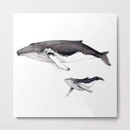 North Atlantic Humpback whale with calf Metal Print