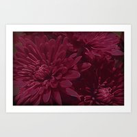 burgundy Art Prints featuring Burgundy Chrysanthemums by Judy Palkimas