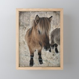 snowy Icelandic horse Framed Mini Art Print