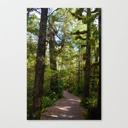 Vegetation growing along the Wild Pacific Trail, Ucluelet BC Canvas Print
