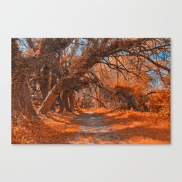 Wye Island Amber Trail Canvas Print