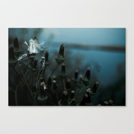 rainy flowers Canvas Print