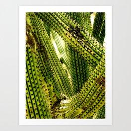 Monochrome Cactus Art Print