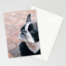 Bruce the Boston Terrier Pug Stationery Cards