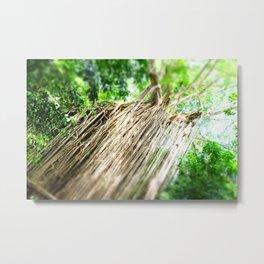 Curtain Fig tree, Cairns Australia Metal Print