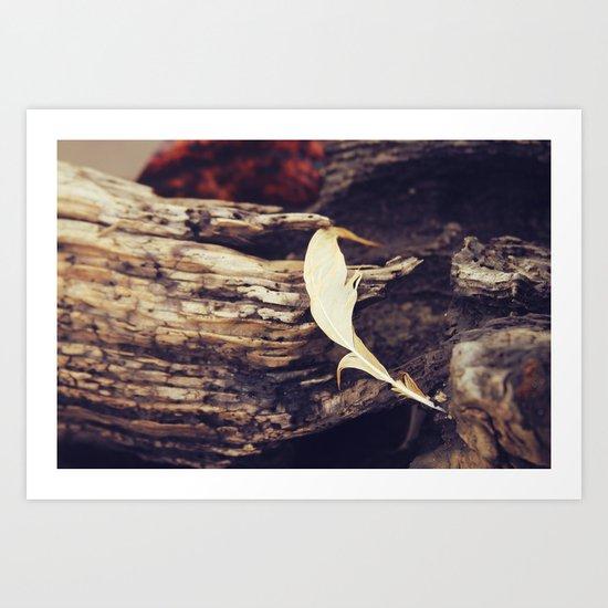 Beach Feathers Art Print