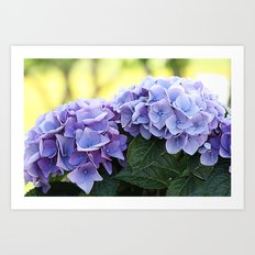 Purple hydrangea(1). Art Print